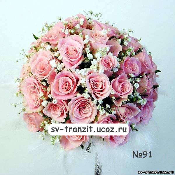 Гидрангия Гортензия  Интернетмагазин цветов растений